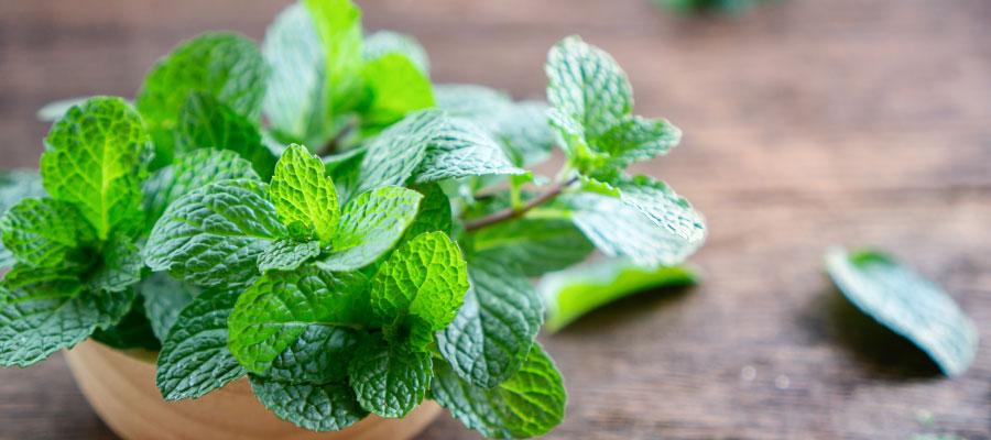 Mint Leaf for Wieght loss